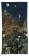 Hawksbill Turtle Beach Towel