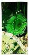 Green Urchin Beach Towel