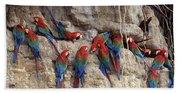 Green-winged Macaw Beach Towel