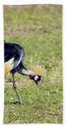 Grey Crowned Crane. The National Bird Of Uganda Beach Towel