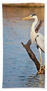 Grey Heron  Ardea Cinerea Beach Towel