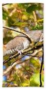 Grey Squirrel - Impressions Beach Towel