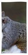 Grey Squirrel Tucking In Beach Towel
