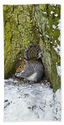 Grey Squirrel With Its Food Store Beach Towel