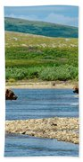 Grizzly Bear Communication In The Moraine River In Katmai  Np-ak Beach Towel