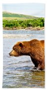 Grizzly Bear Determined To Catch A Salmon This Time In The Moraine River  Beach Towel