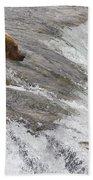 Grizzly Bear Fishing For Sockeye Salmon Beach Towel