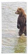 Grizzly Bear Standing To Get A Better Look In The Moraine River In Katmai Beach Towel