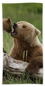 Grizzly Bear With Cub Playing Beach Towel