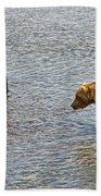 Grizzly Bears Looking For Salmon In Moraine River In Katmai Np-ak Beach Towel