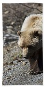 Grizzly By The Road Beach Towel