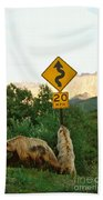Grizzly Cubs Beach Towel