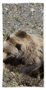 Grizzly Digging Beach Towel