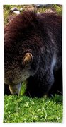 Grizzly Grazing Beach Towel