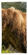 Grizzly On The River Bank Beach Towel