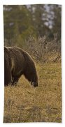 Grizzly Sow And Cub  #6382 Beach Towel