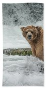 Grizzly Stare Beach Towel