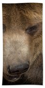 Grizzly Upclose Beach Towel