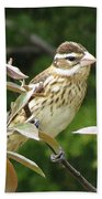 Grosbeak Beach Towel