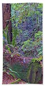 Ground Level Landscape In Armstrong Redwoods State Preserve Near Guerneville-ca Beach Towel