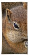 Ground Squirrel Beach Towel