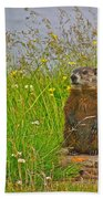 Groundhog At Point Amour In Labrador Beach Towel