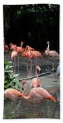 Group Of Flamingos And Lone Heron In Water Beach Towel