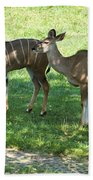 group of Kudu Antelope Beach Towel