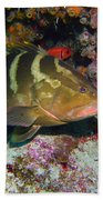 Grouper Beach Sheet