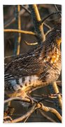 Grouse In A Tree Beach Towel