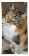 Grumpy Kitty With Emerald Eyes Beach Towel