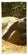 Florida Gopher Tortoise And Home Beach Towel