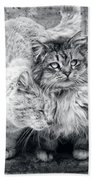 Gutter Kitties Nine Beach Towel