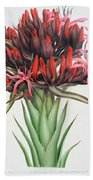 Gymea Lily Beach Towel