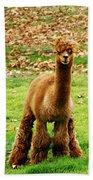 Hairy Brown Gumby Aka Brown Alpaca Beach Towel