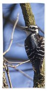 Hairy Woodpecker - Female Beach Towel