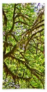 Hall Of Mosses In Hoh Rain Forest In Olympic National Park-washington Beach Towel