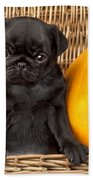 Halloween Pug Beach Towel by Greg Cuddiford