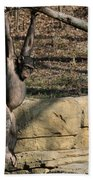 Hanging Chimp 365 Beach Towel