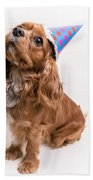Happy Birthday Dog Beach Towel by Edward Fielding