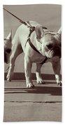 Happy Dogs 14 Beach Sheet