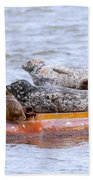 Harbour Seals Lounging Beach Towel