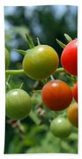 Harvest Tomatoes Beach Towel