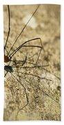 Harvestman Spider Beach Towel
