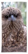 Brown Hawk Face Profile Beach Towel