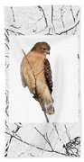 Hawk Framed In Branch Outline Beach Towel