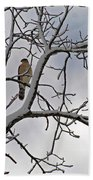 Hawk In Winter Beach Towel