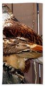 Hawks Beach Towel