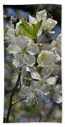 Hawthorn Flowers Beach Towel