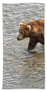 Head Grizzly Bear With Intense Fishing  Focus For Salmon In Moraine River In Katmai Np-ak Beach Towel